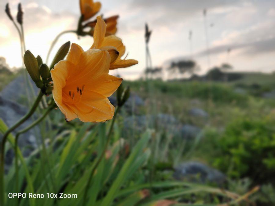 ポートレートモードで花を撮影